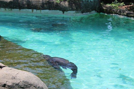 Pittsburgh Zoo & PPG Aquarium: Sea lion pool
