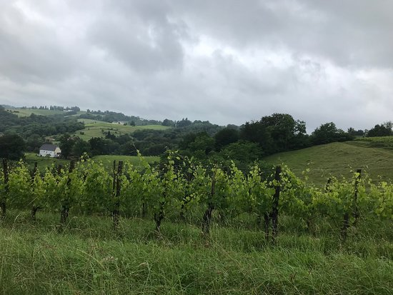 Guide Epicurieuse: Beautiful Jurancon wine country!