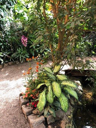 Schmetterlinghaus: Schmetterlingshaus