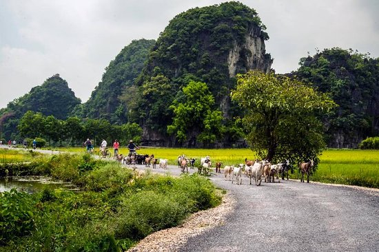 Good Morning Ninh Binh