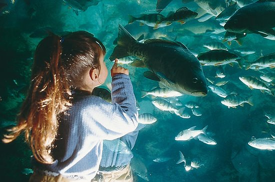 Billet d'entrée Aquarium du...