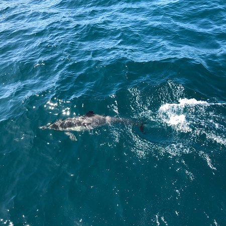 Capt. Dave's Dolphin & Whale Watching Safari: photo7.jpg