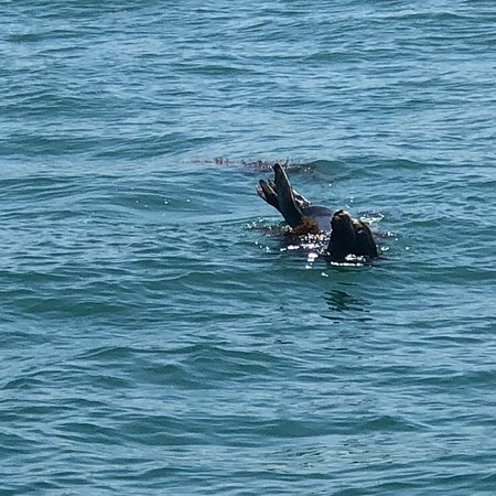 Capt. Dave's Dolphin & Whale Watching Safari: photo8.jpg