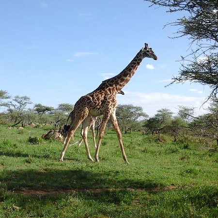 Arusha, Tanzania: getlstd_property_photo