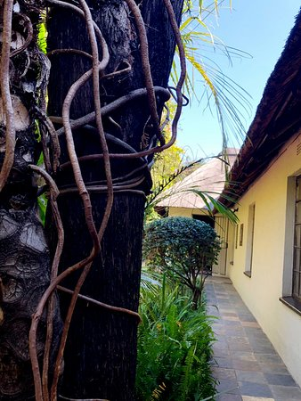 Birch Tree B&B Foto