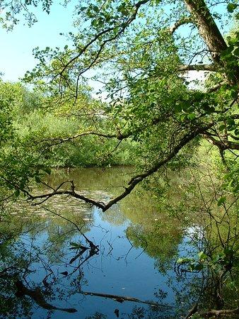 Sandgate Park: The hidden pond