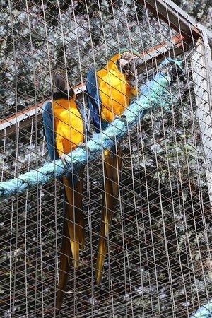 Seddon, Avustralya: Parrots