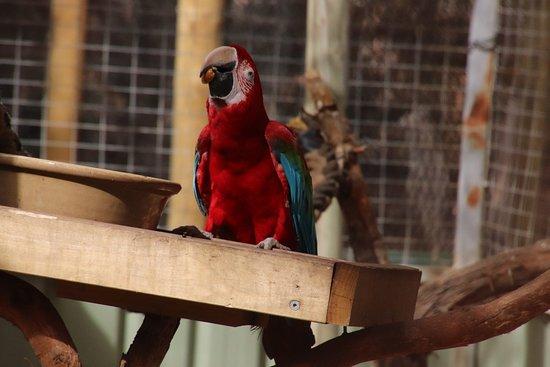 Seddon, أستراليا: More parrots
