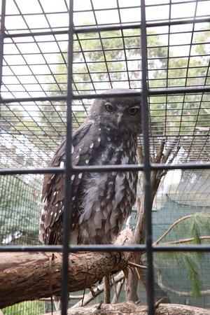 Seddon, أستراليا: An owl
