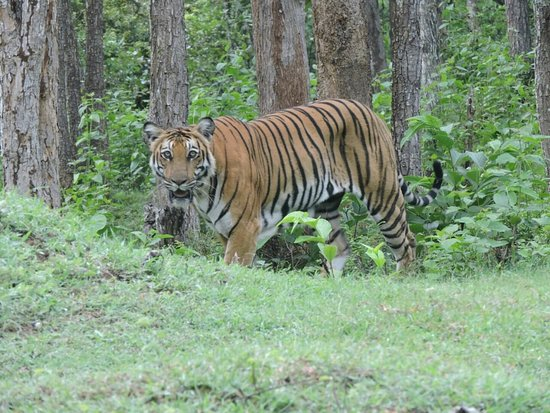 Nagarhole National Park