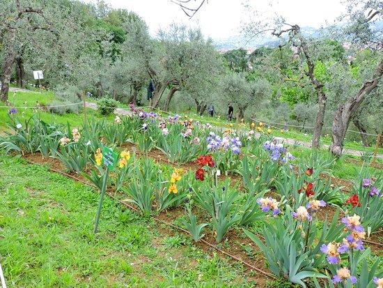 Giardino dell'Iris