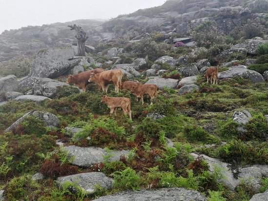 Hiking and Swimming in Gerês National...