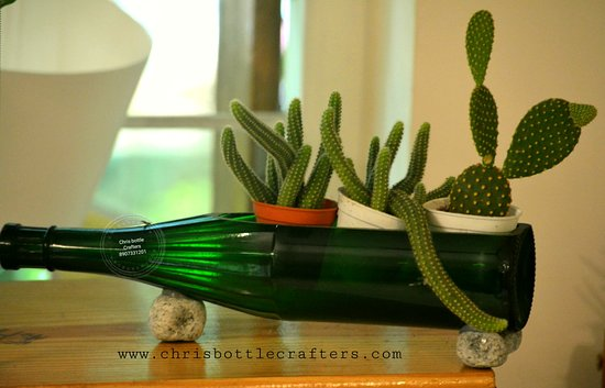 Cactus Plants Collection At Chris Bottle Crafters Indoor Home Garden