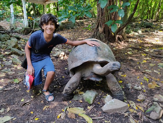 Cousine Island, Seychellen: The Gentle giant