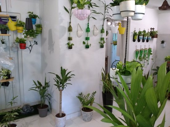 Charmant Chris Bottle Crafters Indoor Home Garden, U Get All Indoor Garden  Decoration Plants, Pots