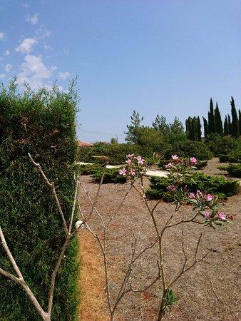 Avgorou, Chipre: DSC_4155_large.jpg