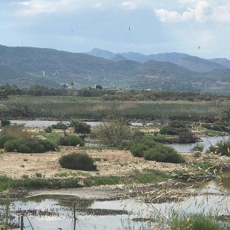 Birdwatching in Valencia