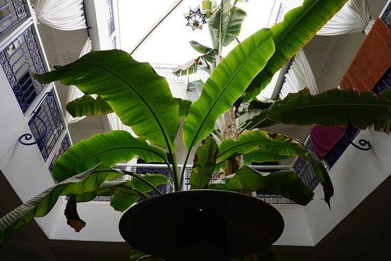 Riad Abaca Badra: Banana Tree
