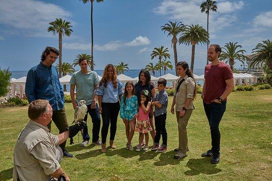 Catalina Falconry Experience