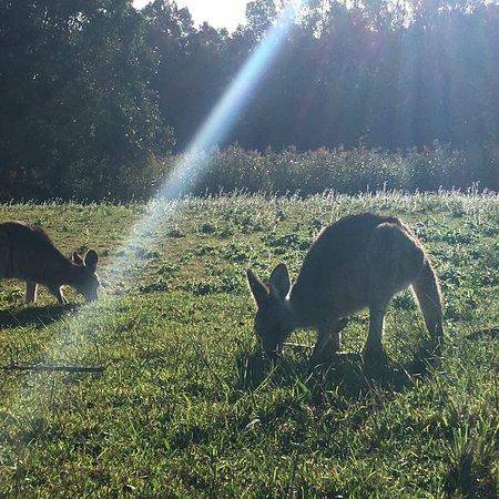 Coombabah, Australia: photo5.jpg