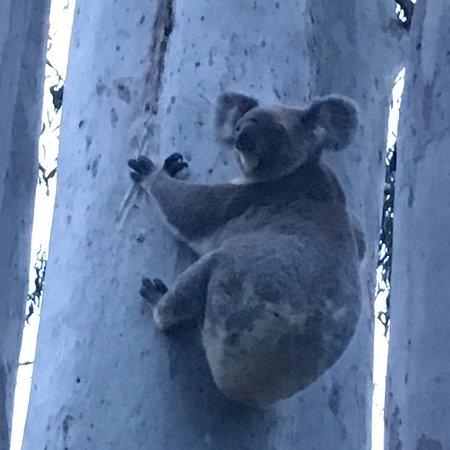 Coombabah, Australia: photo6.jpg