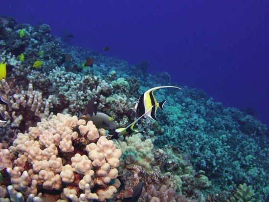 Lahaina Divers: Gotta Love Maui!