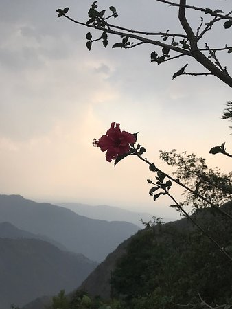 The Hibiscus Plant and the View