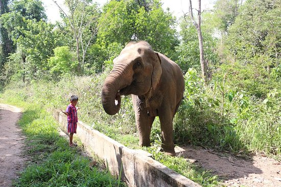 Elephant pride sanctuary