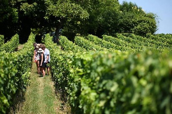 Supersparpaket Bordeaux: Weinregion...