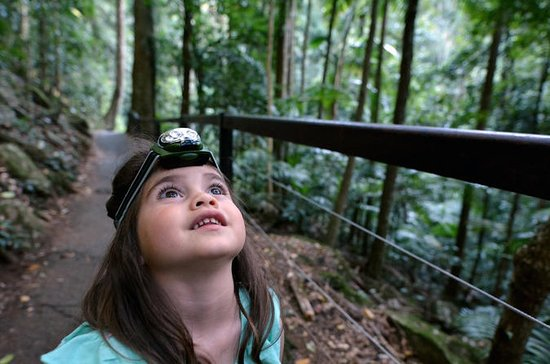 Springbrook National Park Rainforest...