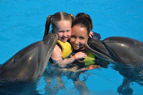 Espectáculo de delfines y natación
