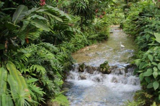 Tour Jardim Botânico e Plantação...