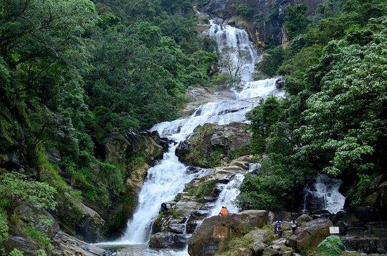 Private Day Trip To Sinharaja Rain...