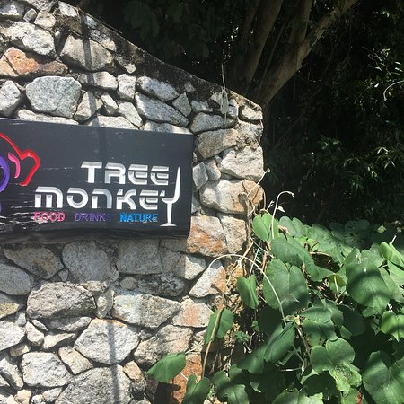 Tree Monkey Restaurant Penang Review