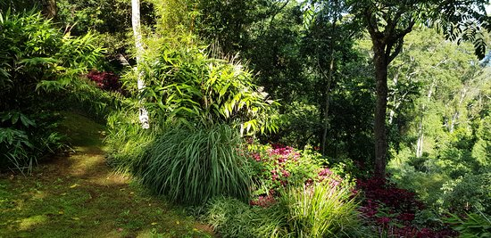 Montville Grove: The garden at Lake Cottage