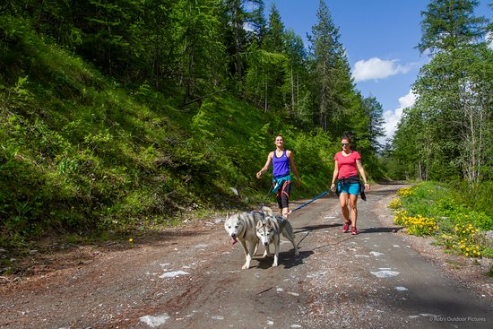 Abries, Frankrike: Cani-randonnée/cani-cross l'été