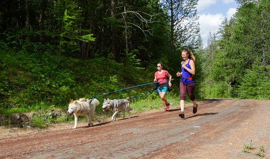 Abries, France: Cani-randonnée/cani-cross l'été