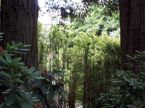 jardin japonais photo de jardin japonais nantes tripadvisor. Black Bedroom Furniture Sets. Home Design Ideas