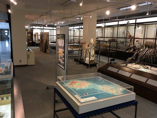 島根大学総合博物館・展示室 - Picture of Shimane University Museum ...