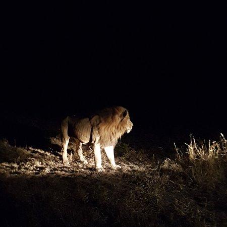 Manyeleti Game Reserve, South Africa: 20180608_182134_large.jpg