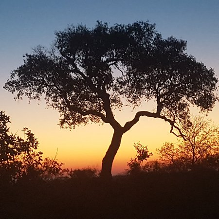 Manyeleti Game Reserve, South Africa: 20180609_173959_large.jpg