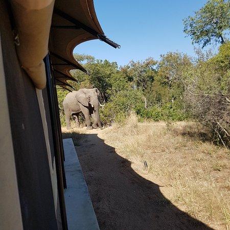 Manyeleti Game Reserve, South Africa: 20180609_125534_large.jpg