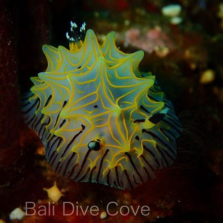 Bali Dive Cove