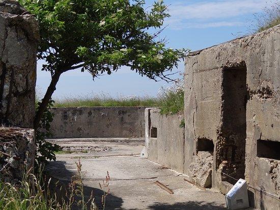 Fort de la Creche: La végétation reprend vite ses droits !