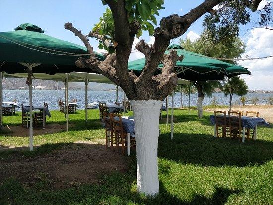 Nea Lampsakos, Hellas: TA_IMG_20180614_151530_large.jpg
