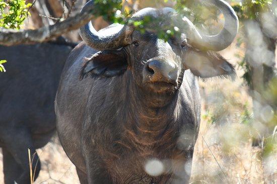 North Luangwa National Park Foto