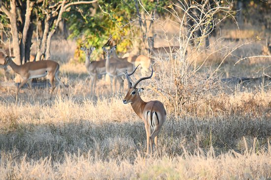 Foto de North Luangwa National Park