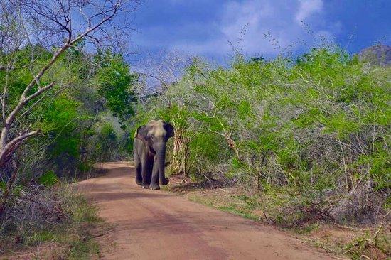 Tissamaharama, Sri Lanka: Imperialtraval.blogspot.com