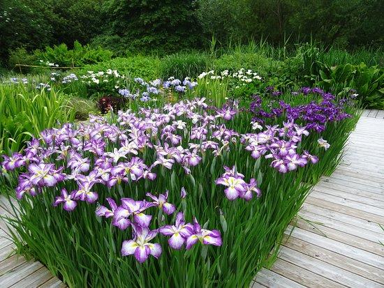 Penvenan, France : carrés d iris sur plan d'eau