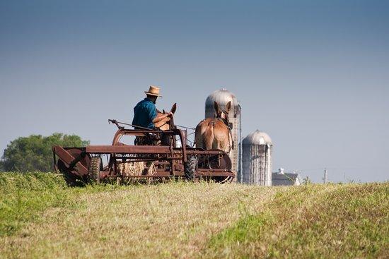 Lancaster, PA: Amish Crop Harvest